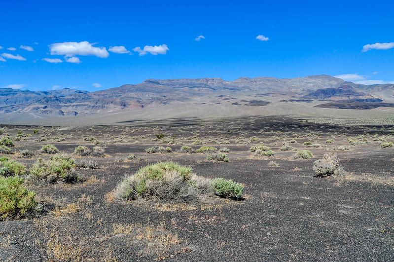 Sagebrush in Death Valley
