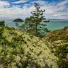 Lichen Covered Rocks by the Sea