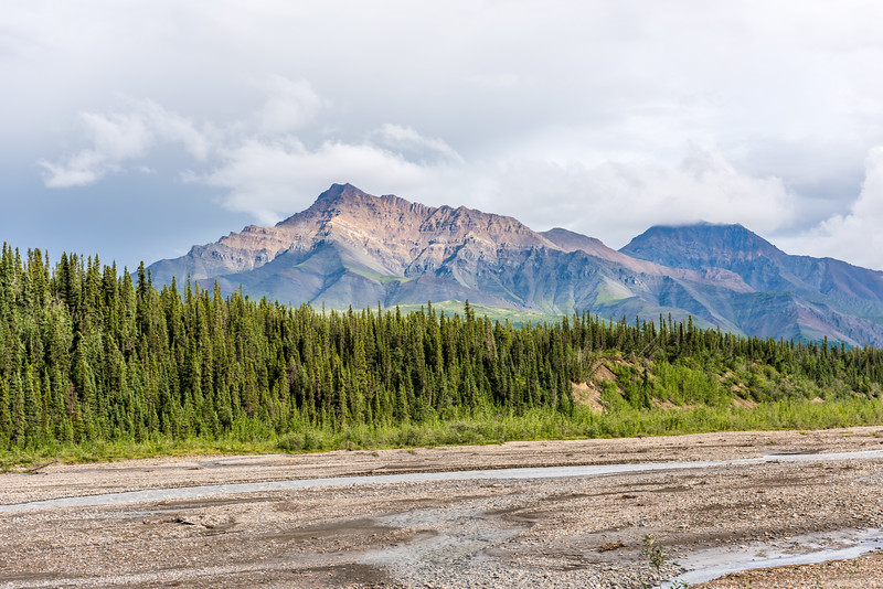 Spruce Forest & Mud Flats
