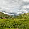 Green Tundra Landscape
