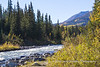 Riley Creek - Denali National Park, Alaska