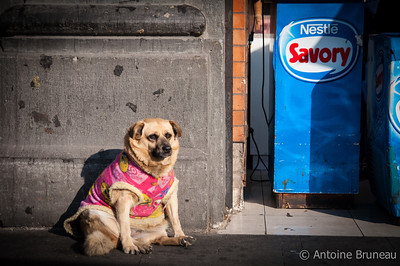 "Santiago de Chile. Stray dogs or ""free-ranging urban dogs"" are incredibly common across South America with almost 3 million of them just for Chile."