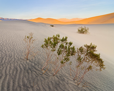 """The Three Truths of Mesquite Dunes"" - Death Valley National Park, CA"