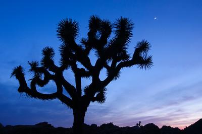 J Tree Moon