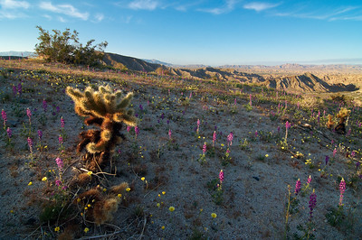 """Carrizo Badlands Sunset"" - Anza Borrego Desert State Park, CA"