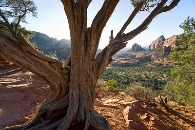 Views through a Juniper tree, Cow Pie formations in the distance, Schnebly Hill Vista, Sedona, Arizona
