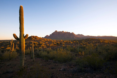 Ironwood National Monument, Ragged Top Mountain in the distance, Arizona
