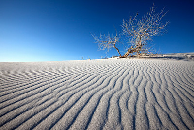 Stark Landscape, White Sands National Mounument, New Mexico
