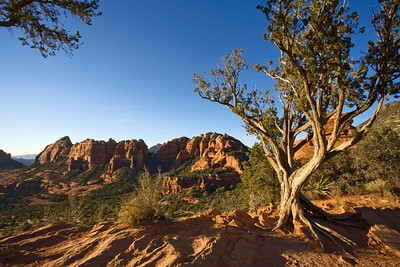 Juniper tree and view from Schnebly Hill Vista, Sedona, Arizona