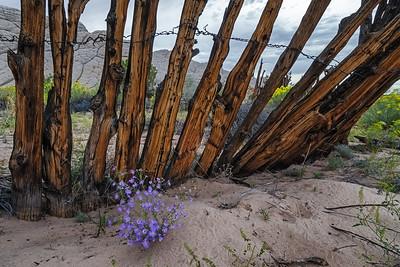 Forgotten Fenceline