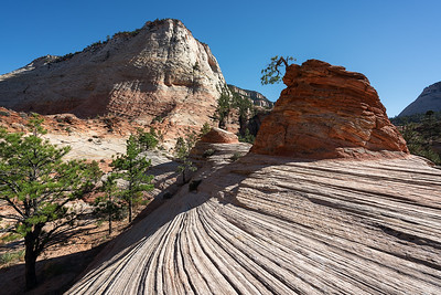 Flowing Stone in Zion (small for web)