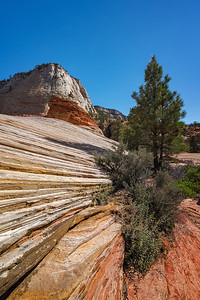 Afternoon in Zion