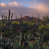 """Eden of the Sonoran""  (2020)"