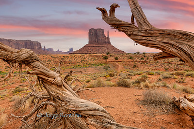 View of iconic West Mitten Butte and a dead tree in the foreground, Monument Valley Navajo Tribal Park,  Arizona