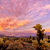 Sunset Storm at the Cholla Garden