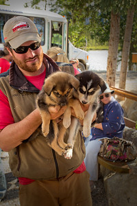 A Husky Homestead trainer hands out puppies to visitors to help with the dogs' social training. Denali, AK. July 6, 2010.