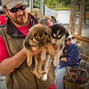 A Husky Homestead trainer hands out puppies to visitors to help with the dogs' social training.<br /> Denali, AK.<br /> July 6, 2010.