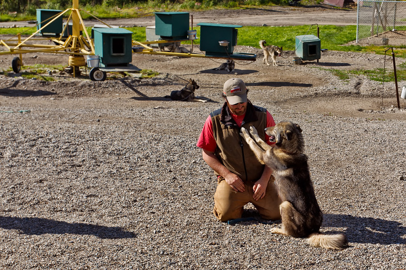 """Trainer with """"Salem,"""" the now-retired lead dog of Jeff King's 2006 Iditarod win.  Jeff KIng calls Salem one of his """"great ones.""""  The carousel in the background is one way the dogs exercise in the summertime.<br /> Husky Homestead, Denali, AK.<br /> July 6, 2010."""
