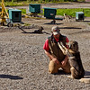 "Trainer with ""Salem,"" the now-retired lead dog of Jeff King's 2006 Iditarod win.  Jeff KIng calls Salem one of his ""great ones.""  The carousel in the background is one way the dogs exercise in the summertime.<br /> Husky Homestead, Denali, AK.<br /> July 6, 2010."