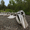 Whale skeleton.  (Whale ribs can be seen in background.)<br /> Alaska Native Heritage Center, Anchorage, AK.<br /> July 4, 2010.