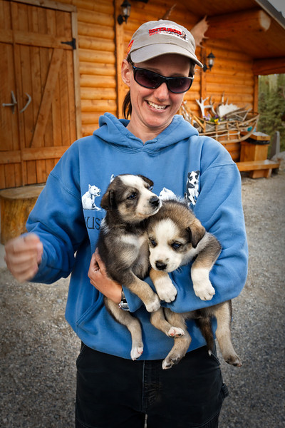A Husky Homestead trainer holds Alaskan Husky puppies.<br /> Denali, AK.<br /> July 6, 2010.