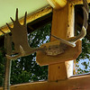 Moose antlers and ammunition in the home of Joanne Porterfield's homestead.<br /> Trapper Creek, AK.<br /> July 5, 2010.