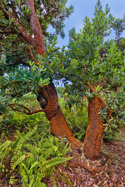 Maui:  Kula Botanical Garden