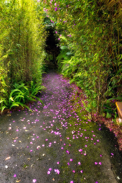 Maui:  Bamboo in Kula Botanical Garden