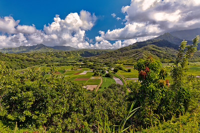 Kauai: View of Taro fields from Princeville lookout.
