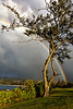Maui:  Rainbow forms over Kapalua as an evening rain moves in.