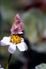 Kauai: Butterfly near Kilauea Lighthouse