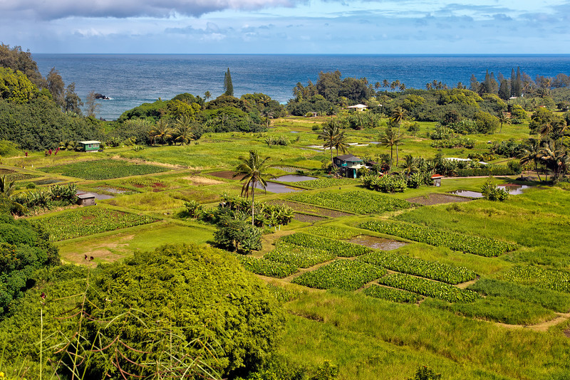 Maui:  Overlooking taro fields of the Keneae Peninsula from the Hana Highway