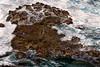 Kauai: Monk Seal resting on the rocks after a hard day fishing - near Kilauea Lighthouse.