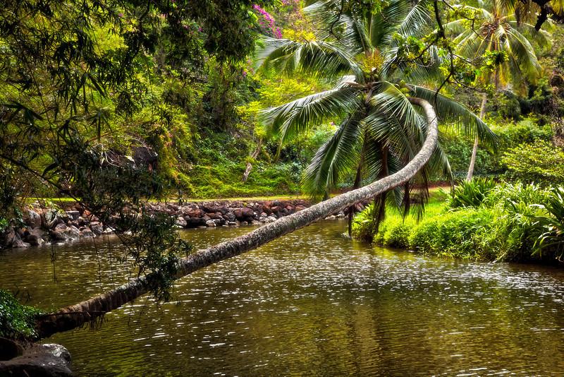 Kauai: Allerton Garden (NTBG)