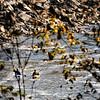 Great Falls Park - Fall 2008 - 11-01-08 - 105 NX edited