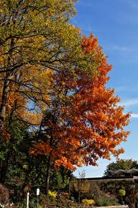 National Arboretum DC - Fall 2009