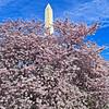 Washington DC Tidal Basin - 03-29-08 - 011 NX_dxo edited