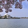 Washington DC Tidal Basin - 03-29-08 - 040 NX_dxo edited