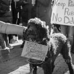 2017-02-04 Devos Protest - Verona Park  AMY_2748