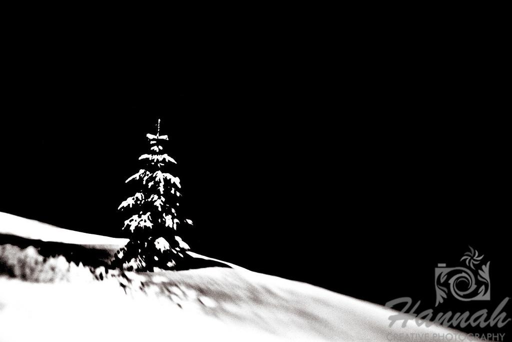 A digital art of a single snowy pine tree with true black background.  © Copyright Hannah Pastrana Prieto
