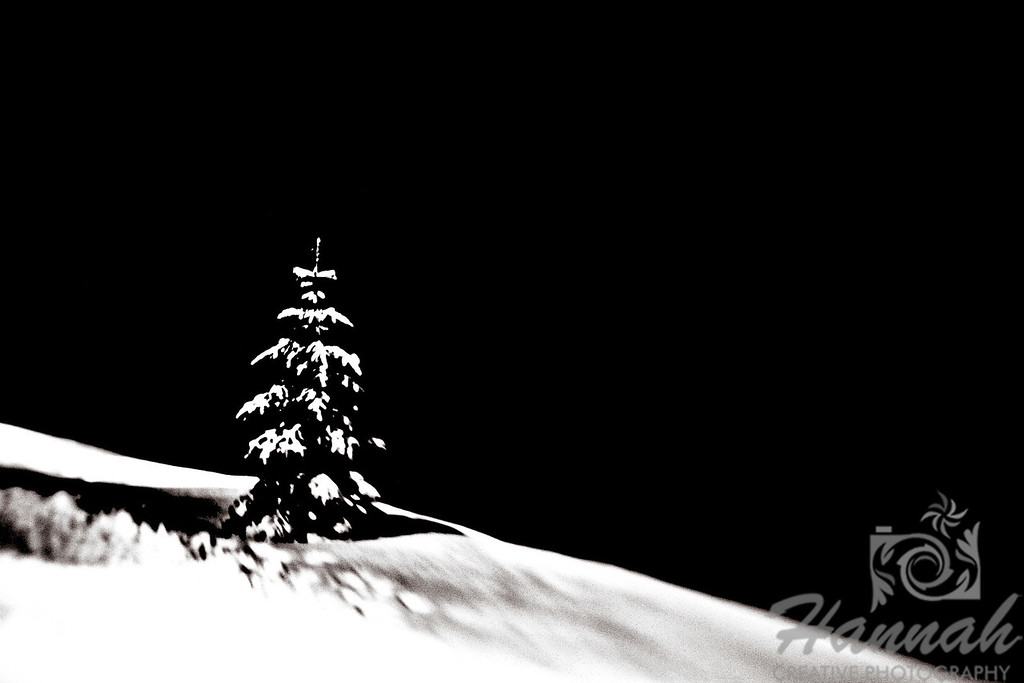 A digital art of a single snowy pine tree with true black background.  © Copyright Hannah Pastrana Prieto