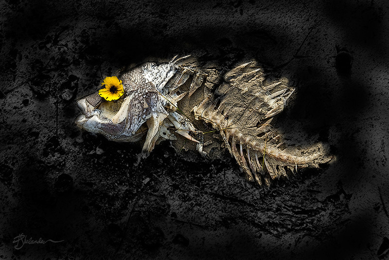 Fish with Flower