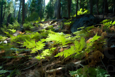 Forest Floor 016 | Wall Art Resource