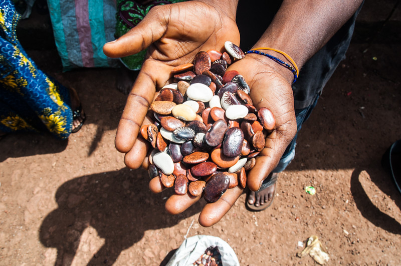 Magic Beans - Kambia, Sierra Leone