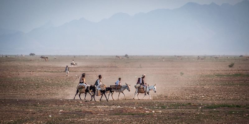Home from the Fields - Tokar Delta, Red Sea State, Sudan