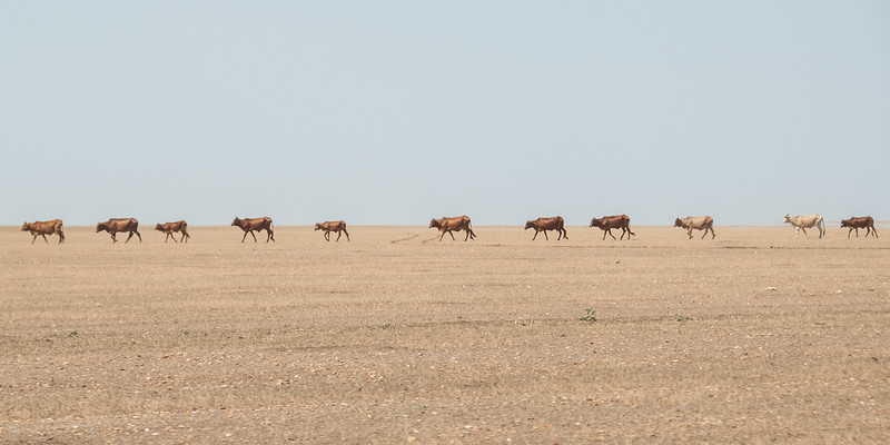 Long Walk - Gedaref, Sudan