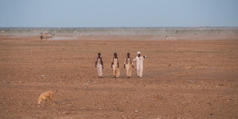 In from the Fields - Tokar Delta, Red Sea State, Sudan