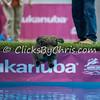 2015 NADD/AKC Eukanuba National Championship - Sunday, Dec. 13, 2015 - Frame: 8458