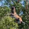 Dock Diving Competition and UpDog Challenge - Southtown K9 - Saturday, Sept. 17, 2016
