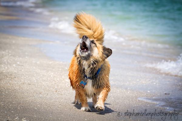 20140427dog_beach_fort_desoto_Tampa_Stephaniellenphotography com-_MG_0651-Edit